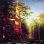 Albert Bierstadt (1830-1902)  The Great Trees, Mariposa Grove, California  Oil on canvas, 1876  118 1/8 x 59 1/4 inches (300.1 x 150.5 cm)  Private collection